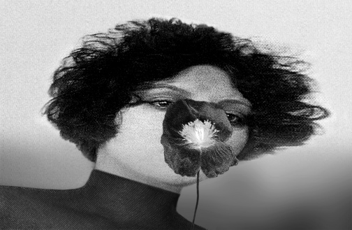 Pat Brassington, Pansy (2013)